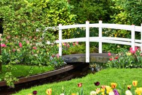 Nie wyobrażasz sobie ogrodu bez drzew, które co roku dają soczyste i świeże owoce? - 51508