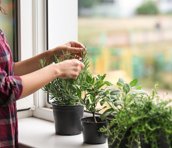 Domowa uprawa, czyli co zyskujemy urządzając w mieszkaniu ziołowy ogródek? - 51716