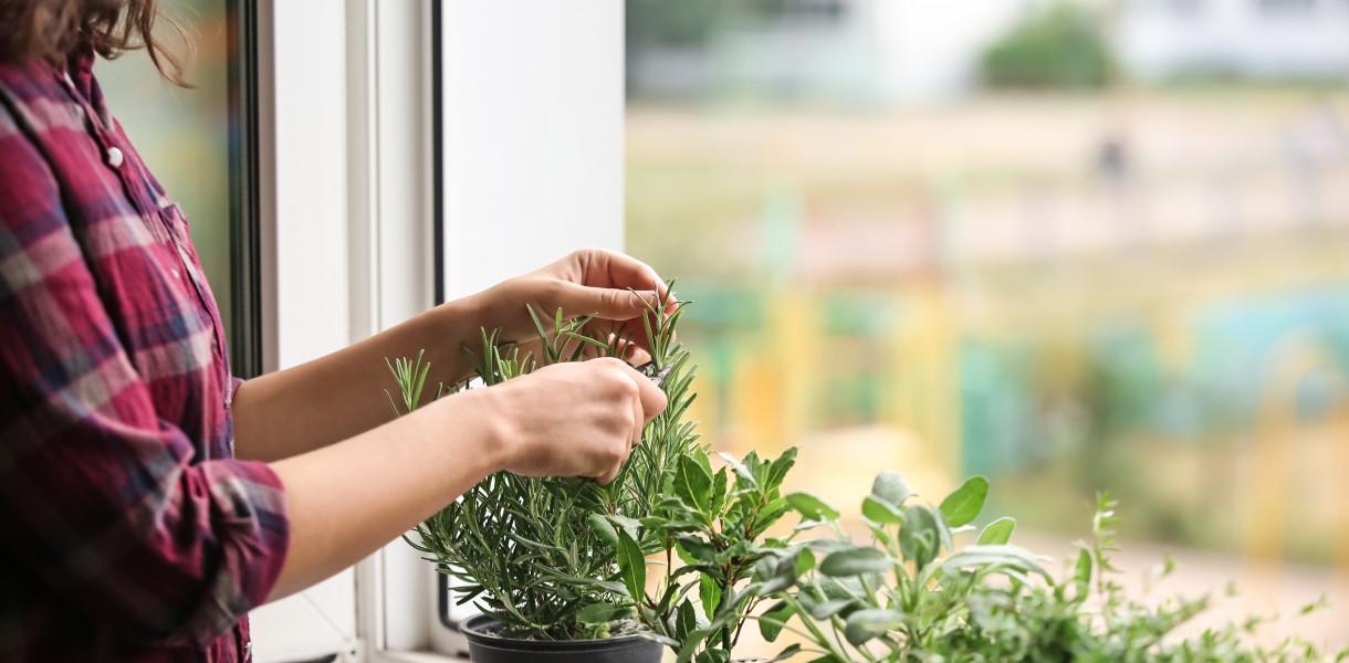 Domowa uprawa, czyli co zyskujemy urządzając w mieszkaniu ziołowy ogródek?