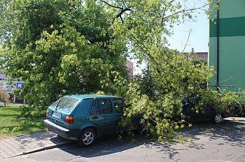Konar drzewa runął na samochody w Gostyniu-9064