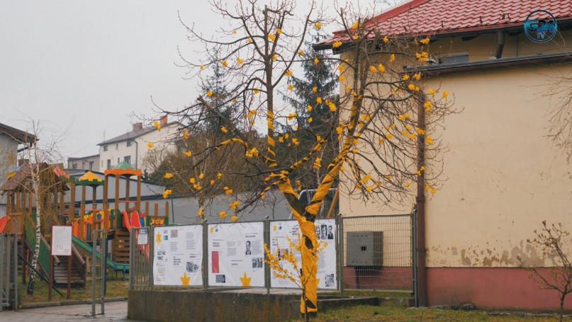 Żonkilowe drzewo - Akcja CKiB w Piaskach z okazji